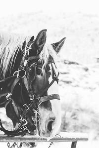 Horse Print-2