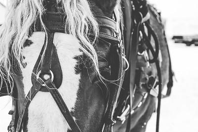 Horse Print-8