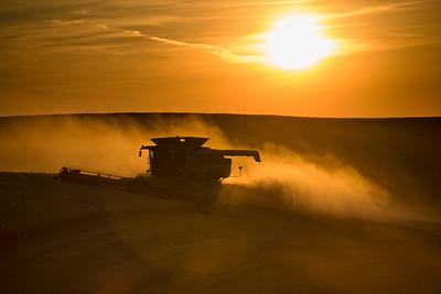 Harvest evening.