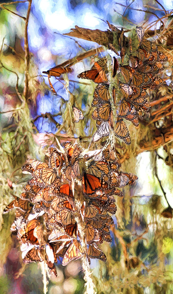 PG Monarchs