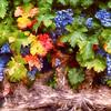 Napa Colors