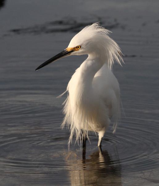 Egret Hunting