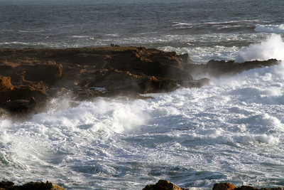 Point Lobos Surrounded by Beauty