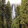 Yosemite Falls Trees