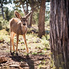 Grand Canyon Wildlife