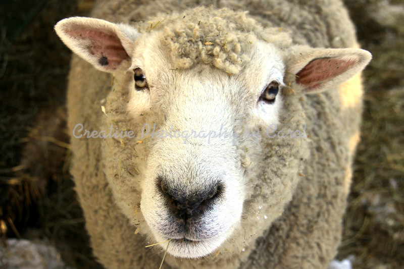 Ewe Looking at Me?