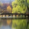 Rogers Park Pond - pring