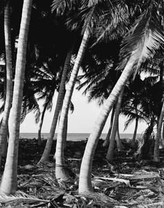 Coconut Grove, Queens Highway, Great Exuma, Bahamas