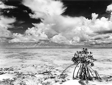 Mangrove, South Bight, Andros, Bahamas