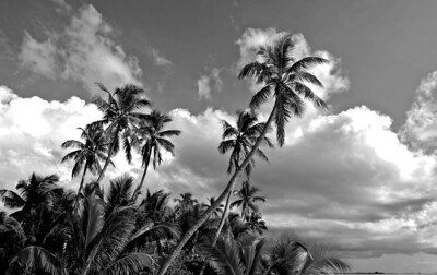 Tiamo palms, South Andros, Bahamas