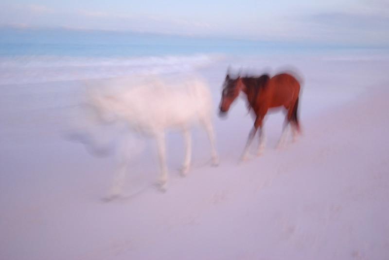 Harbour Island Horses  no. 11