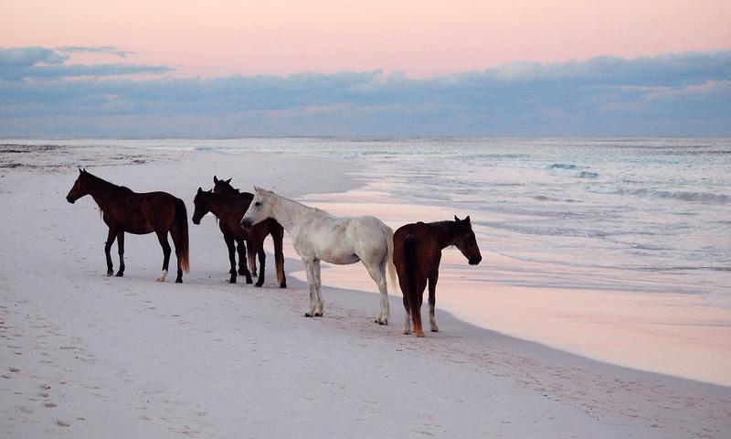 Harbour Island Horses  no. 8