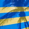 Blue yellow palm shadow