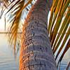 Sunset, Morada Bay palm