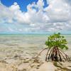 Mangrove, Andros, Bahamas