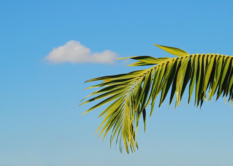 Palm, Cloud, Islamorada