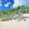 Sea Lavender, Pink Sands Resort, Harbour Island, Bahamas