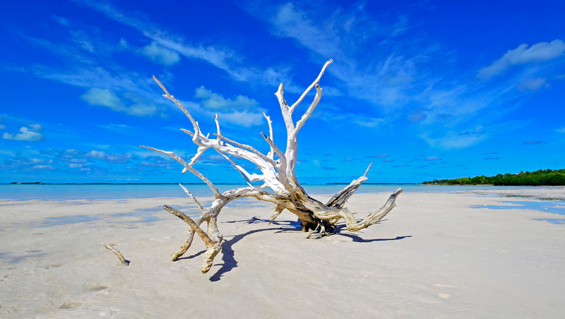 Lone Tree, Harbour Island, Bahamas
