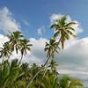 Tiamo Palms