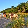 Horses, Playa Tamarindo