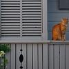 Briland Cat