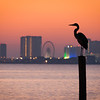 "Crane on a Pier<br /> My focus was on the sunrise as I was shooting around a small pier, with the Pensacola  Beach ""skyline"" in the background. I looked over as this large crane came along and made himself comfortable. I had to move down the shore a bit to get a nice profile and had time for just one good shot before he moved, then flew away."