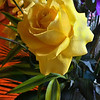 A Yellow Rose<br /> While we might not remember the exact arrangement, number of buds or other specifics, we will remember that someone thought enough to want to make a difference.