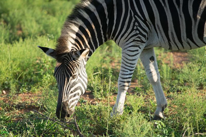 South Africa, December, January, Safari, Vacation, Sony