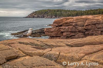 Acadia's Coastal Landscape