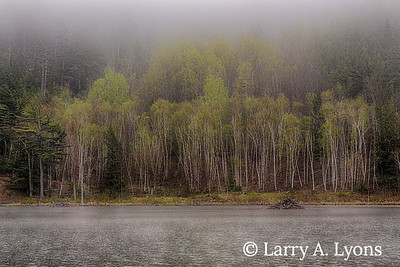 Foggy Morning at Beaver Pond