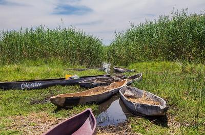 Okavango Delta, Botswana Makoro Canoes parked near out campsite on the Okavango Delta