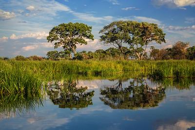 Okavango Delta, Botswana Trees reflect in the calm waters of the Okavango Delta..