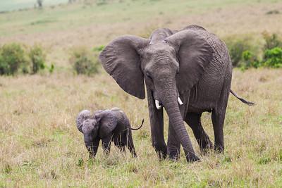 Masai Mara, Kenya Mother and baby elephant