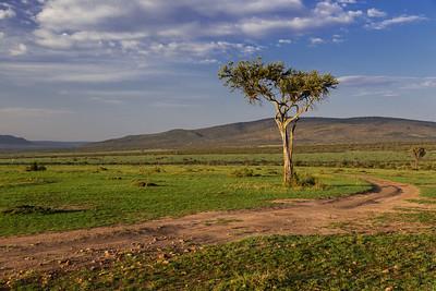 Masai Mara, Kenya Morning on the Masai Mara