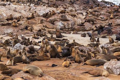 Cape Cross, Namibia A Cape Fur Seal colony at Cape Cross.