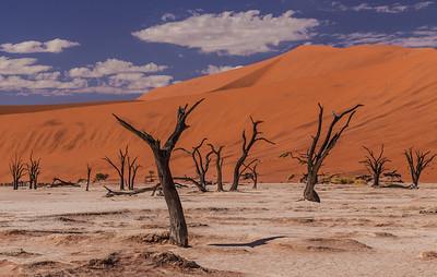 Namib Desert, Namibia Dead trees on the salt pan at Deadvlei.