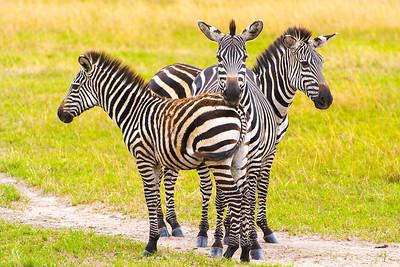 Akagera National Park, Rwanda
