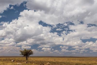 Serengeti National Park, Tanzania A view across Serengeti National Park.