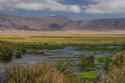 Ngorongoro Crater, Tanzania A lake filled with hippos in Ngorongoro Conservation Area