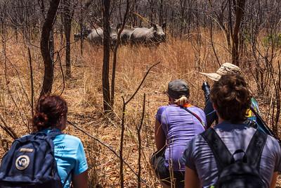 Matobo National Park, Zimbabwe Tracking white rhinos in Matobo National Park.