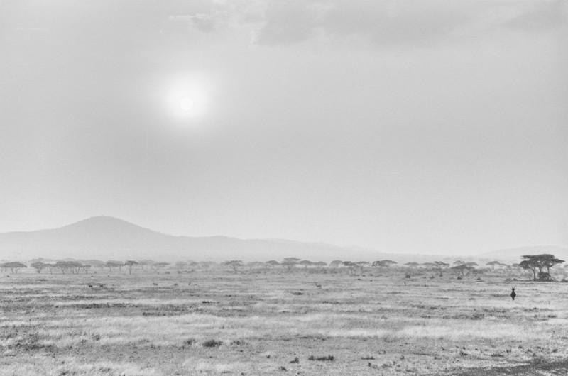 On Safari in Africa, 1986