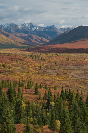 Autumn in Denali
