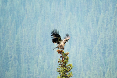 Eagle #1 - Brooks Range Mountains, Alaska