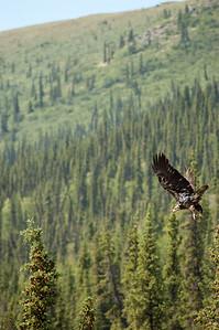Eagle #4  - Brooks Range Mountains, Alaska