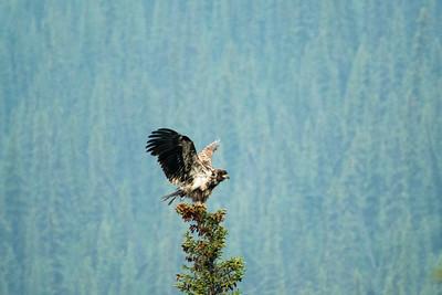 Eagle #2- Brooks Range Mountains, Alaska