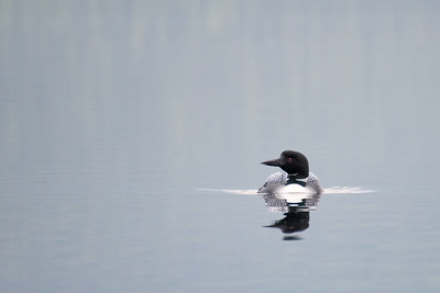 Loon #2 - Brooks Range Mountains, Alaska