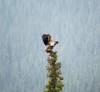 Eagle #3 - Brooks Range Mountains, Alaska