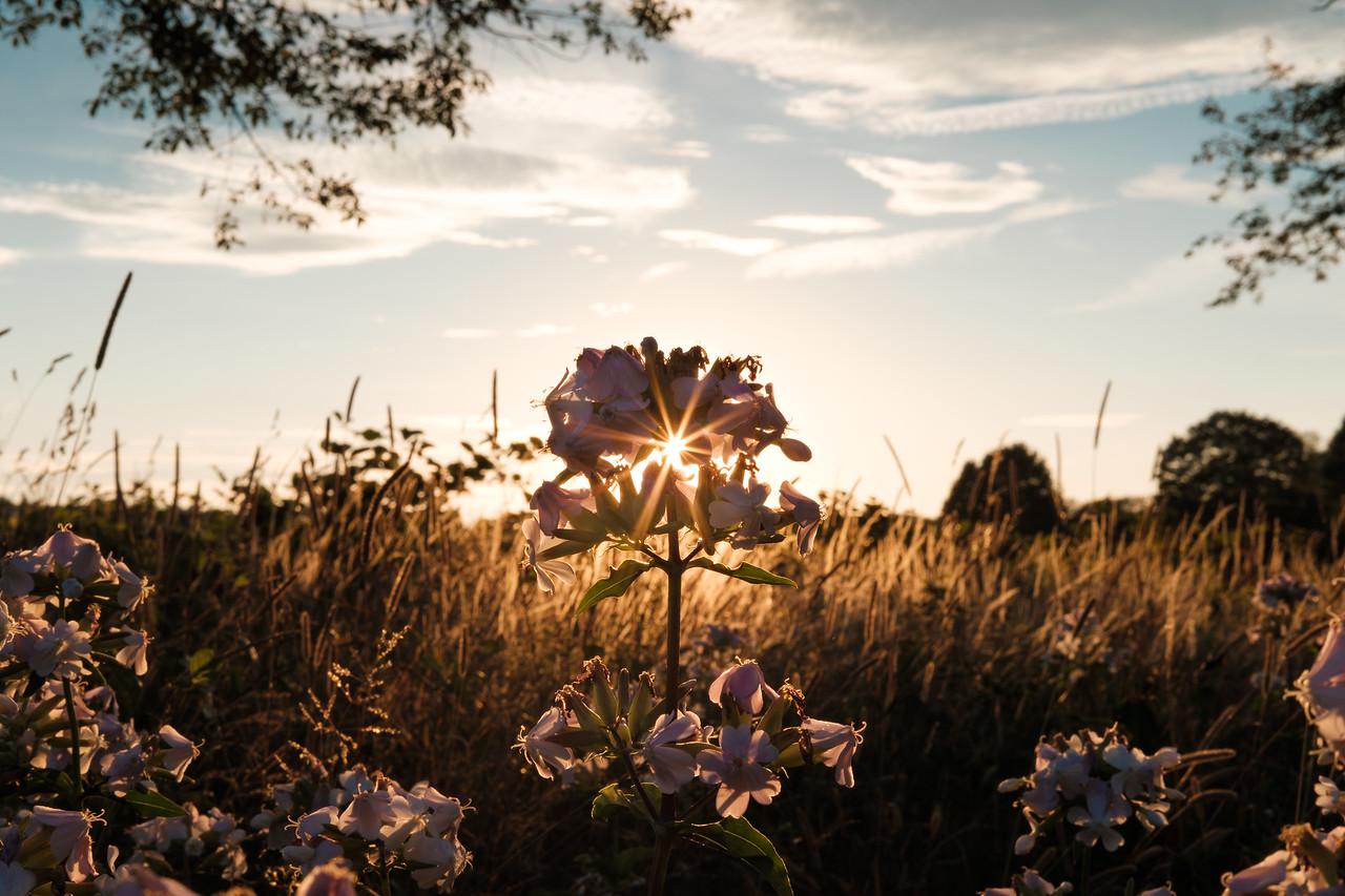 Blossoming Light