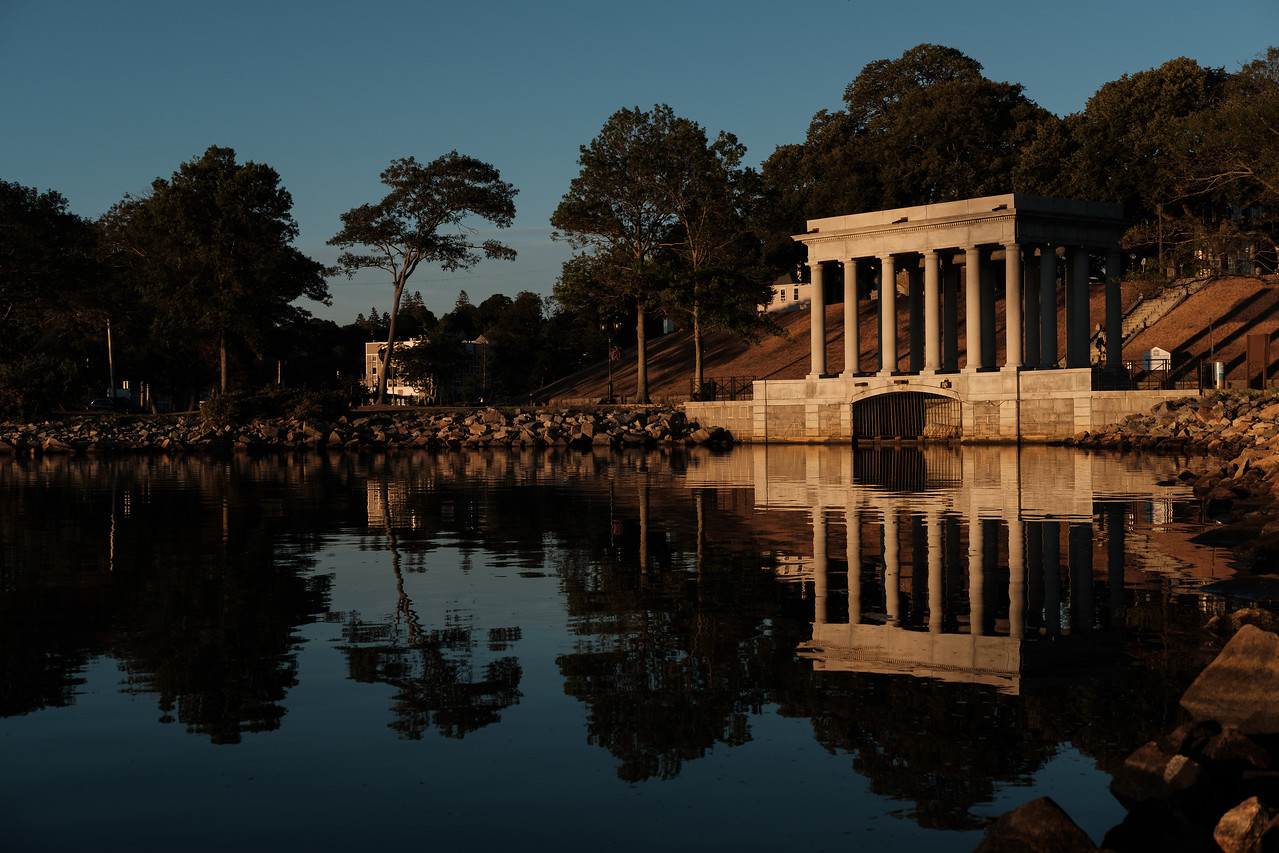 Early Light Plymouth Rock
