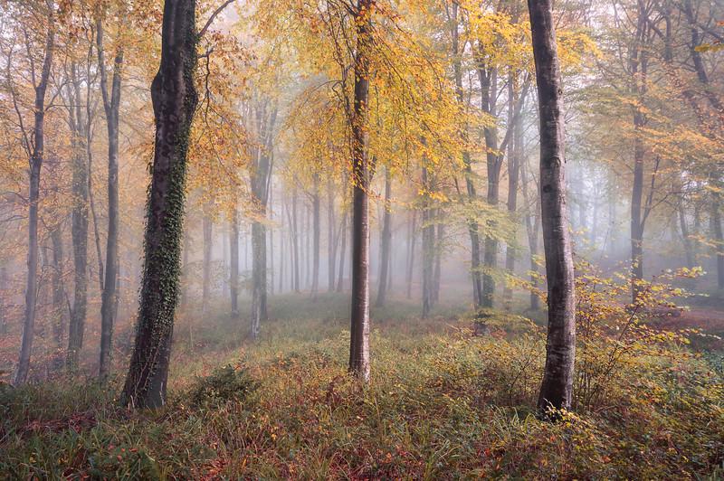 Autumnal Hooke